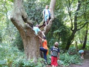 Children in tree on camping trip