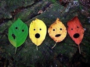 Multi coloured leaf image